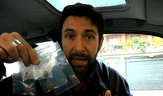 Maconha misturada com heroína preocupa autoridades na Itália