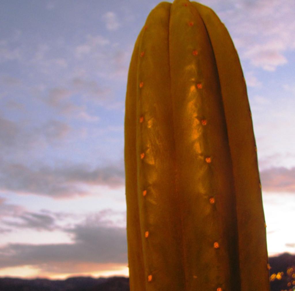 O San Pedro - ou Wachuma - é usado nos Andes há mais de 3 mil anos