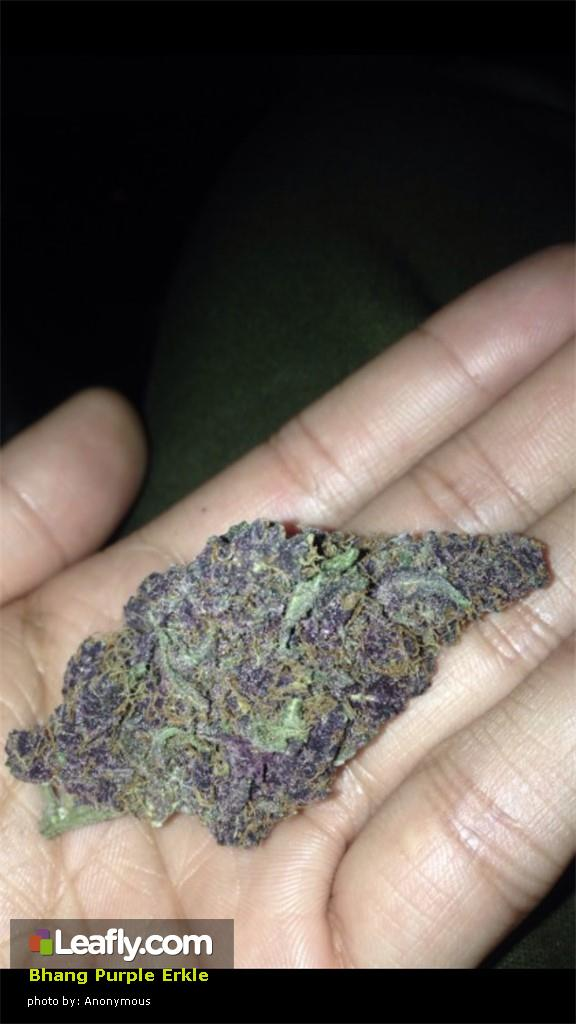 bhang-purple-erkle__primary_258c