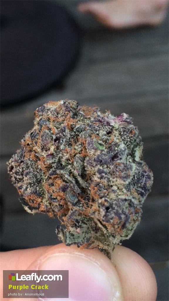 purple-crack__primary_b129