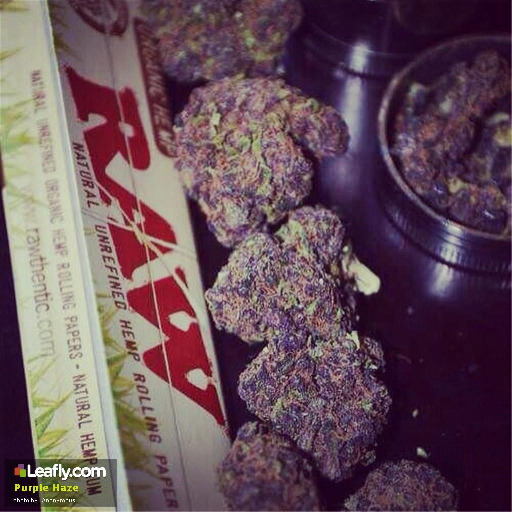 purple-haze__primary_6a82