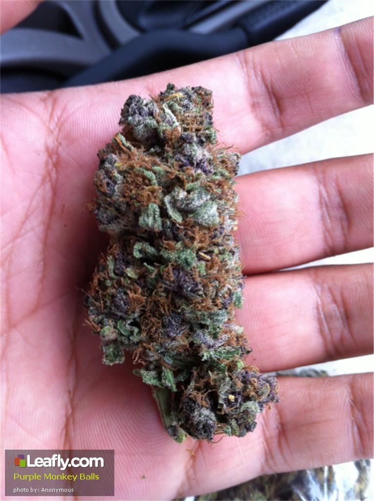 purple-monkey-balls__primary_1d65