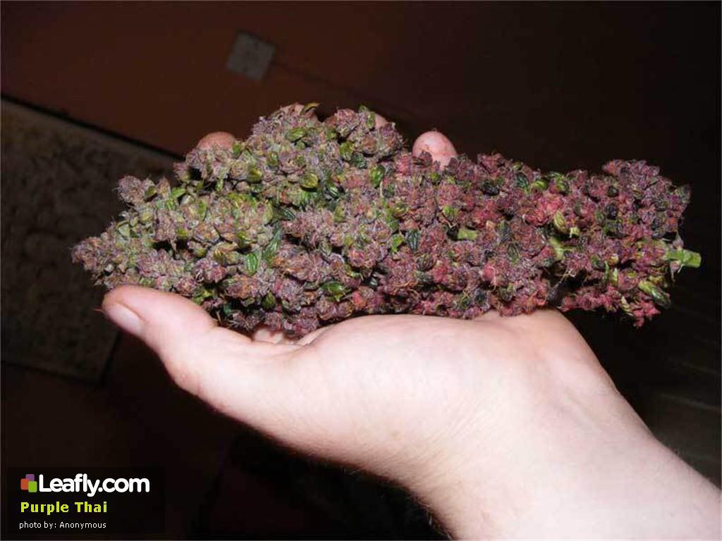 purple-thai__primary_d4b9
