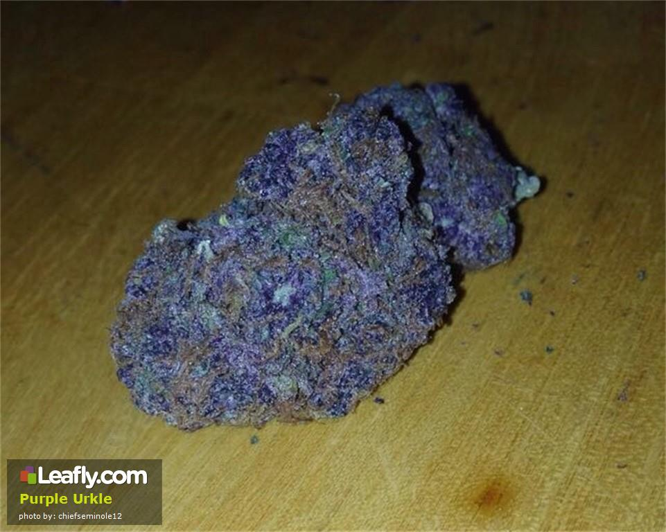 purple-urkle__primary_9f48
