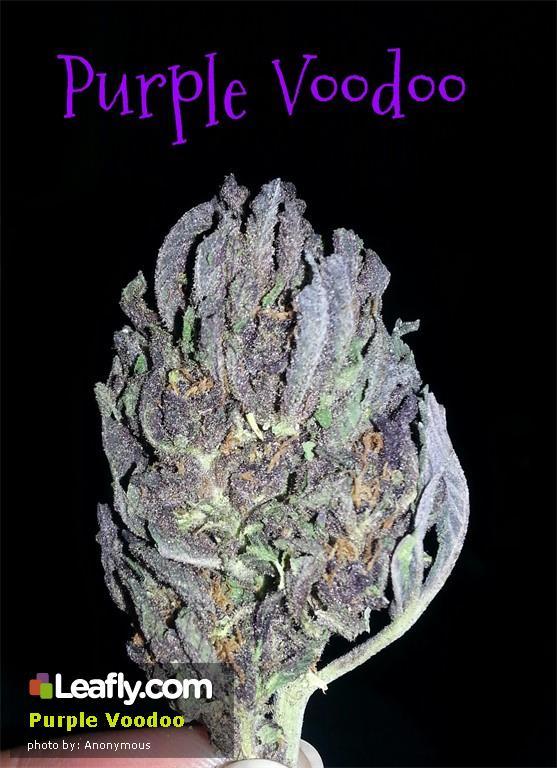 purple-voodoo__primary_e35d