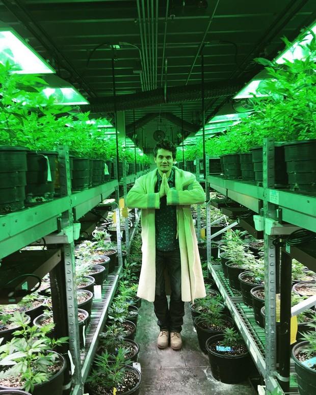 John Mayer posta foto em plantação de maconha