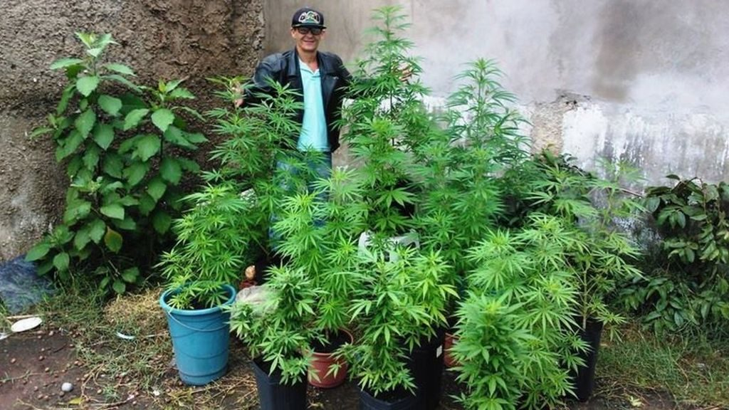 thcproce_cultivadores