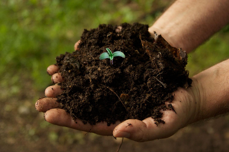 Senado vai discutir descriminalização do cultivo da maconha