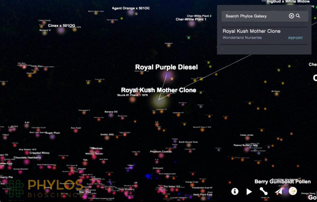 Phylos Galaxy: navegue no mapa completo das espécies de maconha em 3D
