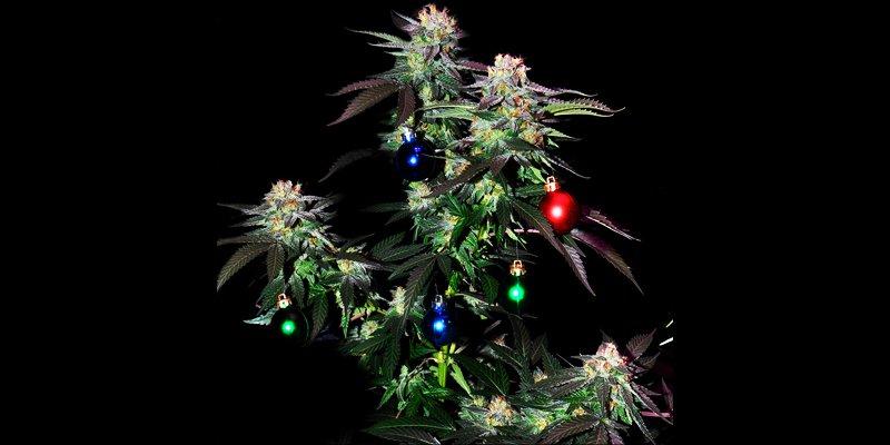 Walmart Christmas Tree