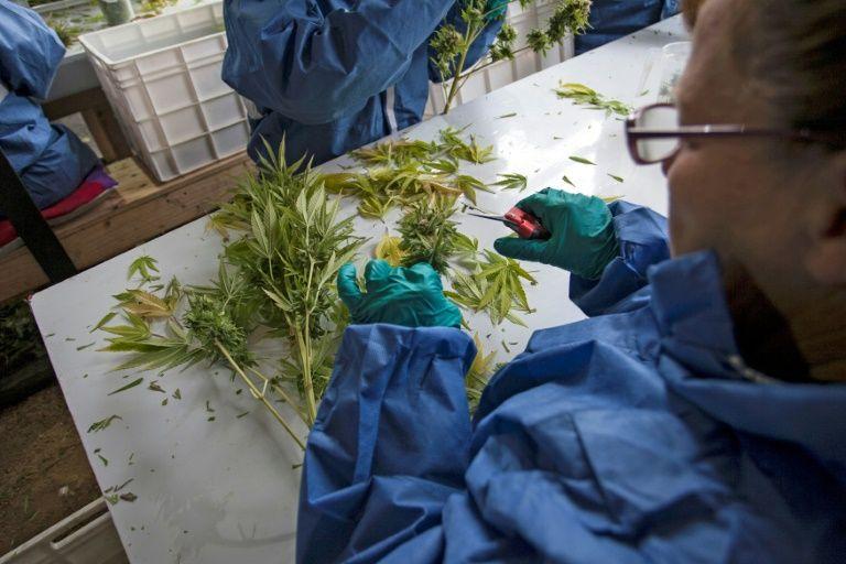 Chile comercializa seu primeiro medicamento à base de maconha