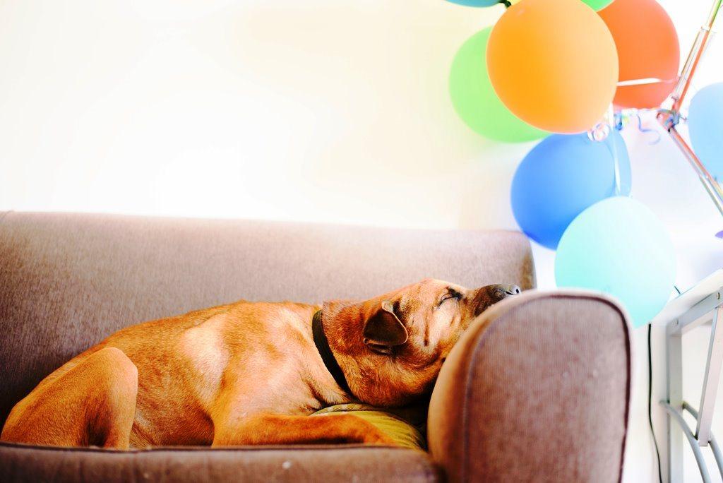 Couch lock songs: 2 horas de música para curtir chapado no sofá