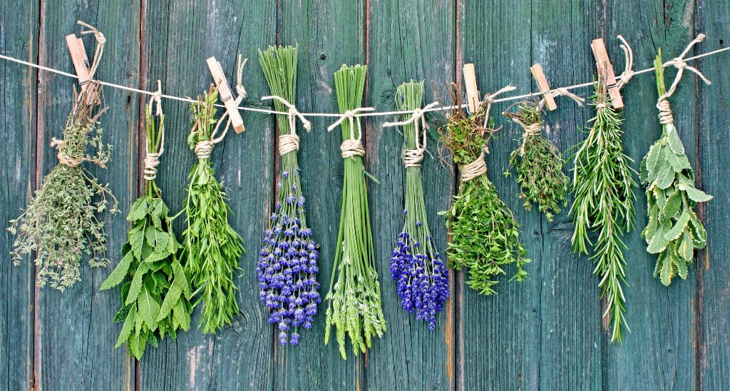 10 plantas medicinais para vaporizar (além da maconha)
