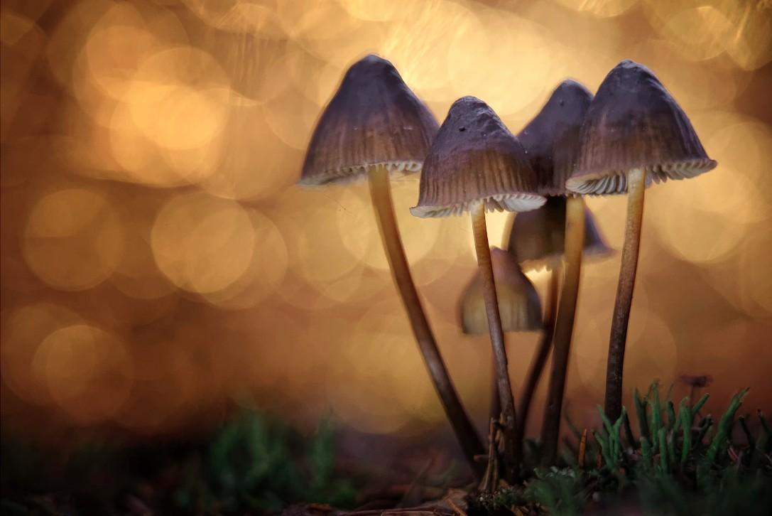 Denver é a primeira cidade dos EUA a descriminalizar uso de cogumelos alucinógenos