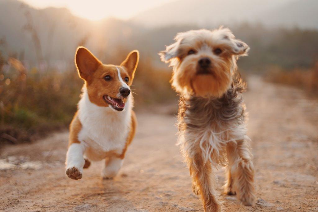 Lei para uso de maconha em tratamento veterinário é aprovada nos EUA