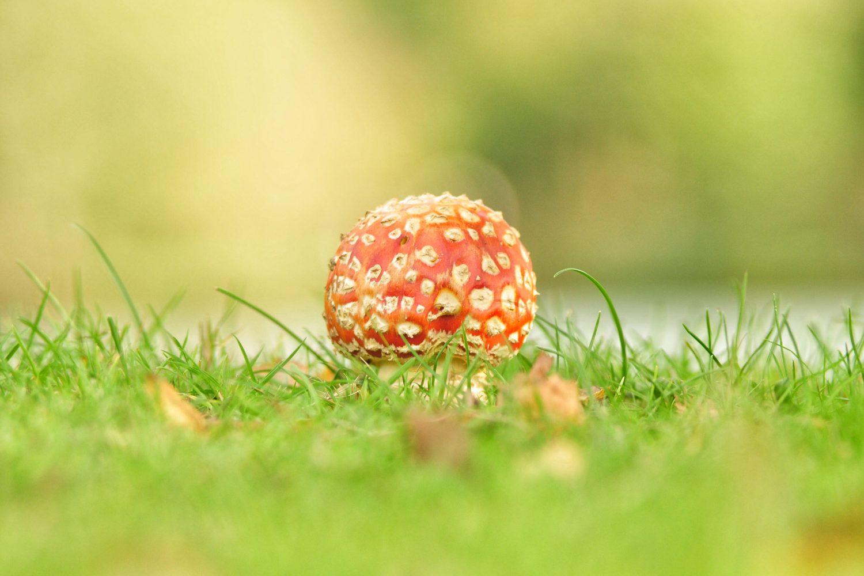 Cogumelos mágicos seguem passos da cannabis para uso medicinal